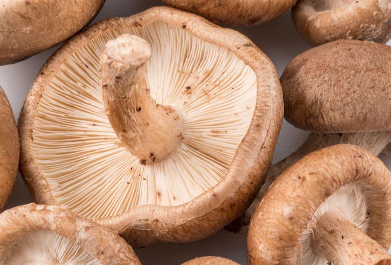 shiitake mushroom skin